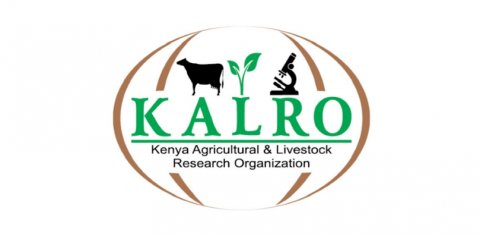 kalro-food-crops-research-institute-809
